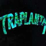 Traplanta
